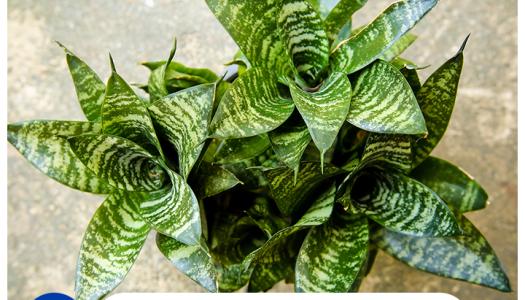 5 plantas que purificarán tu hogar