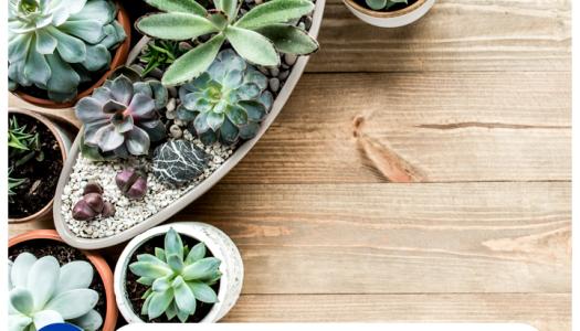 Las mejores plantas para el hogar