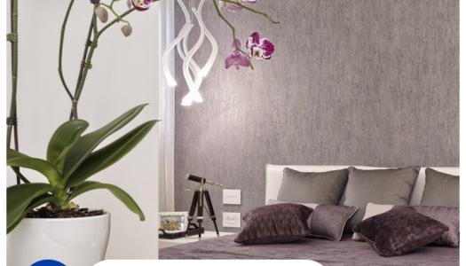 Cómo aplicar el Feng Shui en tu hogar