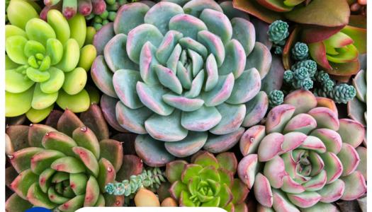 Plantas para olvidadizos