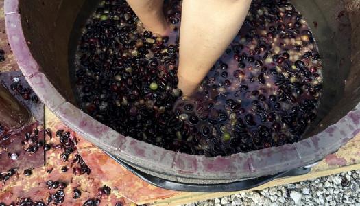 Fiestas de la Vendimia 2018 ¡Llegó el tiempo de celebrar el Vino Mexicano!
